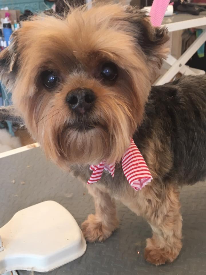 Dog Grooming - Abbie