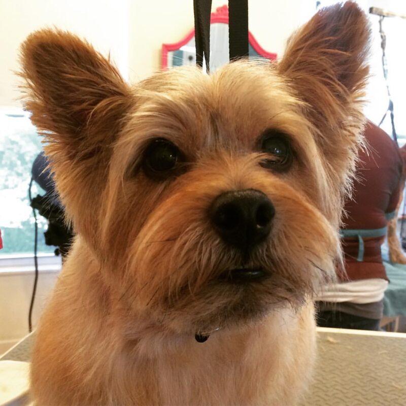 Dog Grooming - Charlie