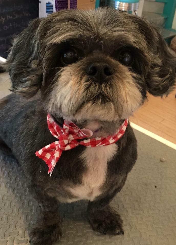 Dog Grooming - Ebony