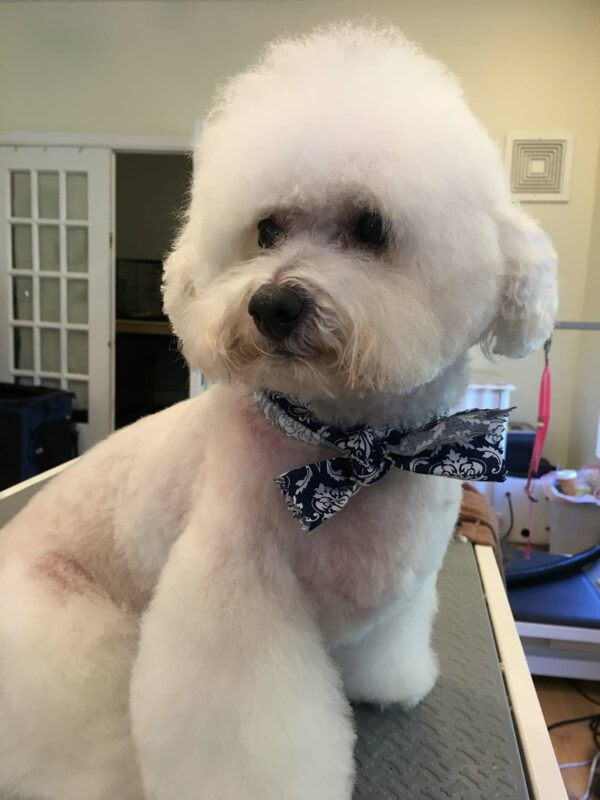 Dog Grooming - Frosty