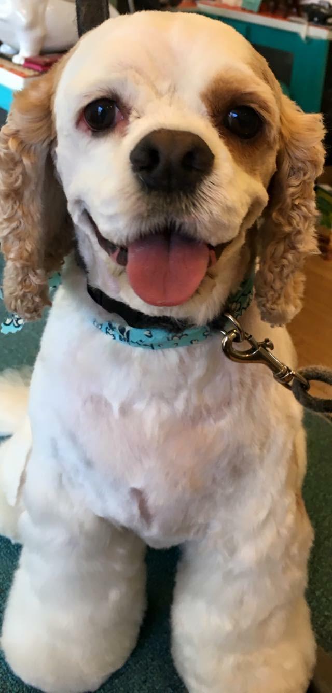 Dog Grooming - Gia's dog grooming KCMO